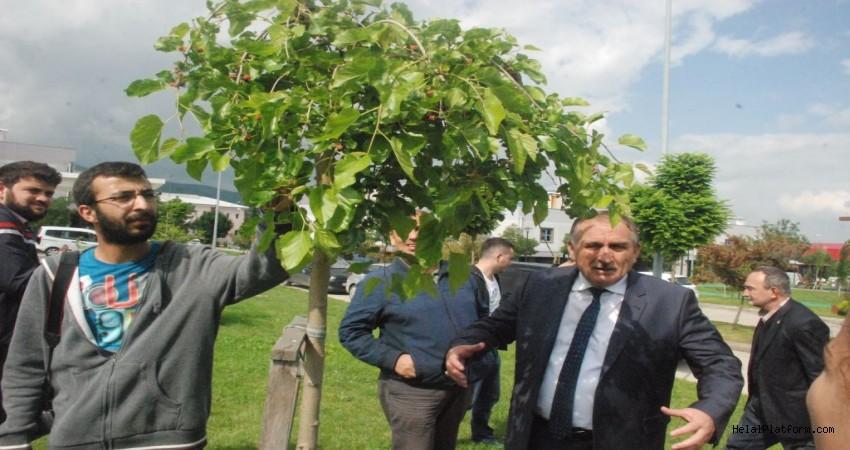 Bahçelerden dışarı dökülen veya parklarda bulunan meyveler helal mi?