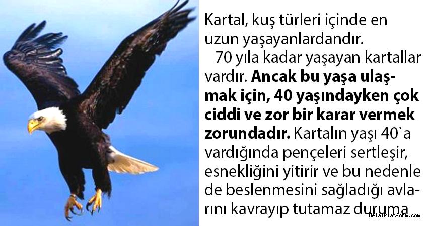 Kartal, kuş türleri içinde en uzun yaşayanlardandır.
