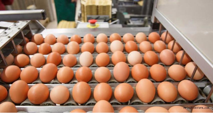 Yumurta tebliğindeki değişiklik Resmi Gazete'de yayımlandı...