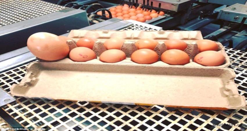 Yumurtanın İçinden Çıkanlar Herkesi Şaşırttı