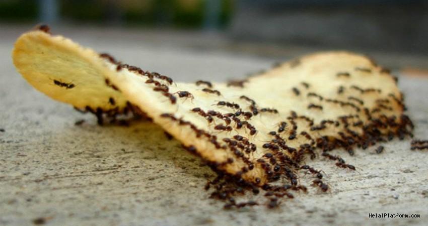 Mutfağı İstila Eden Karıncalardan Kurtulmanın En Zararsız ve En Kolay 6 Yolu