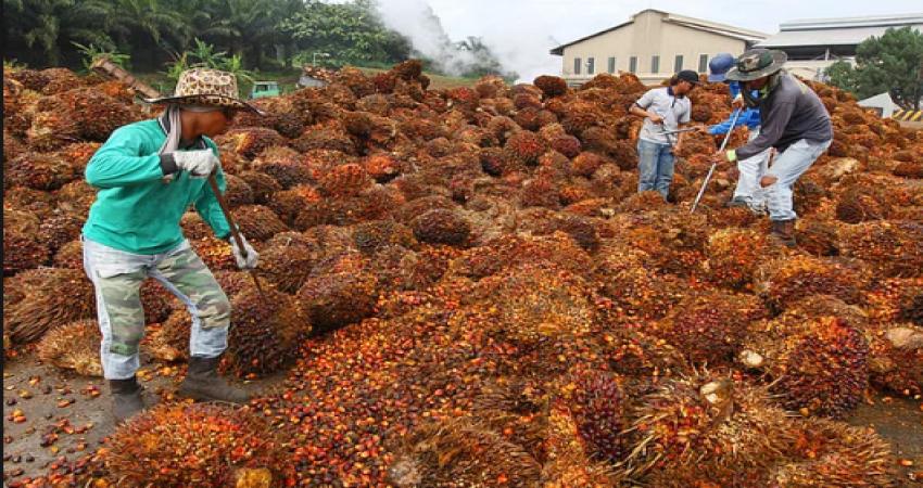 Palm Yağı Operasyonunda Amaç Malezya'yı Batırmak
