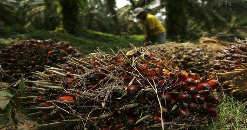 Palm yağı zararlı mı?