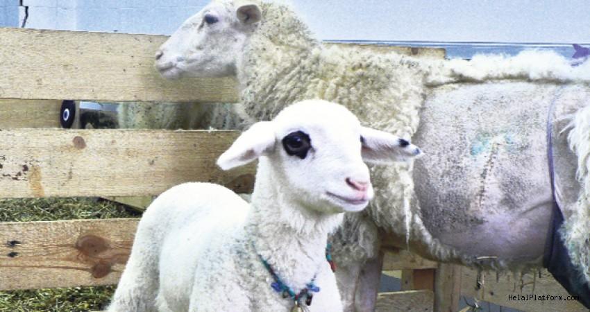 Türkiye'de 2007'de klonlanan ilk koyuna ne ad verilmiştir